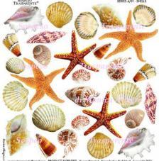 Lámina adhesiva Shells 23x23 cm