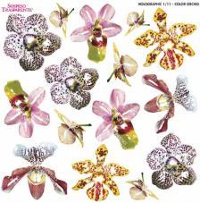 Sospeso transparente Color Orchid 23x23 cm
