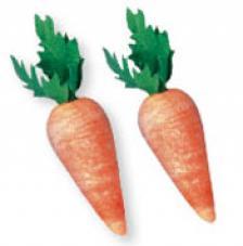 10 pastanagues de 18mm