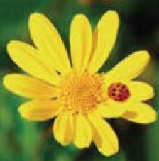 20 servilletas. Flor amarilla