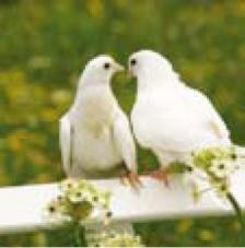 20 servilletas. Palomas blancas
