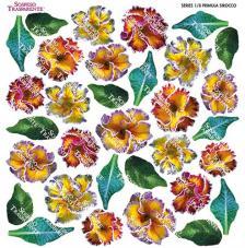 Sospeso transparente prediseñado Primula Sirocco 23x23 cm