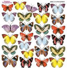 Sospeso transparente prediseñado Little Butterfly 23x23 cm