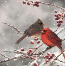 20 Servilletas Navidad. Pájaros