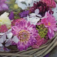 20 servilletas. Flores púpura