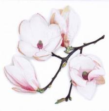 20 servilletas. Rama magnolia blanca