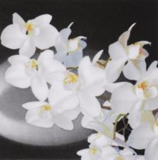 20 servilletas. Orquídea fondo gris