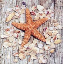 20 servilletas. Estrella y conchas marinas