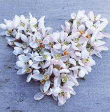 20 servilletas. Flores blancas