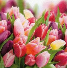 20 servilletas. Tulipanes rosas y violetas