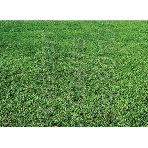 Green Grass. Lamina A4