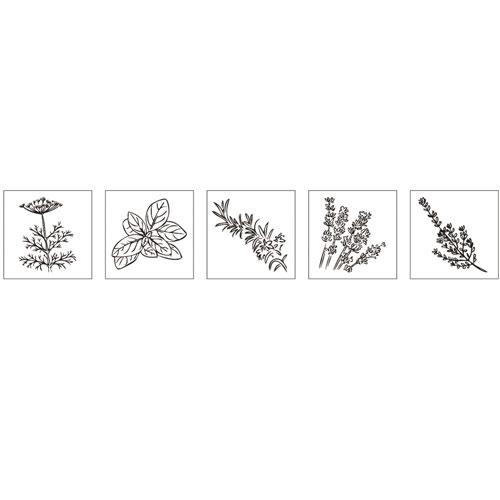 Kit 5 sellos madera de hierbas aromáticas